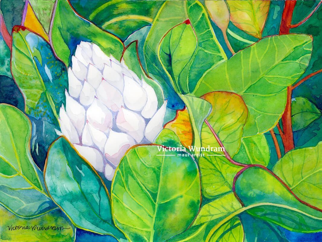 Victoria Wundram | Maui Artist | White Ginger